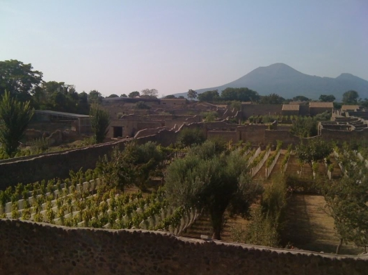 An example of ancient viniculture techniques in Pompeii 79 AD.  Today these vineyards are curated by Mastroberardino wineries producing limited vintages of Greek origin vines including the Lacryma Christi.